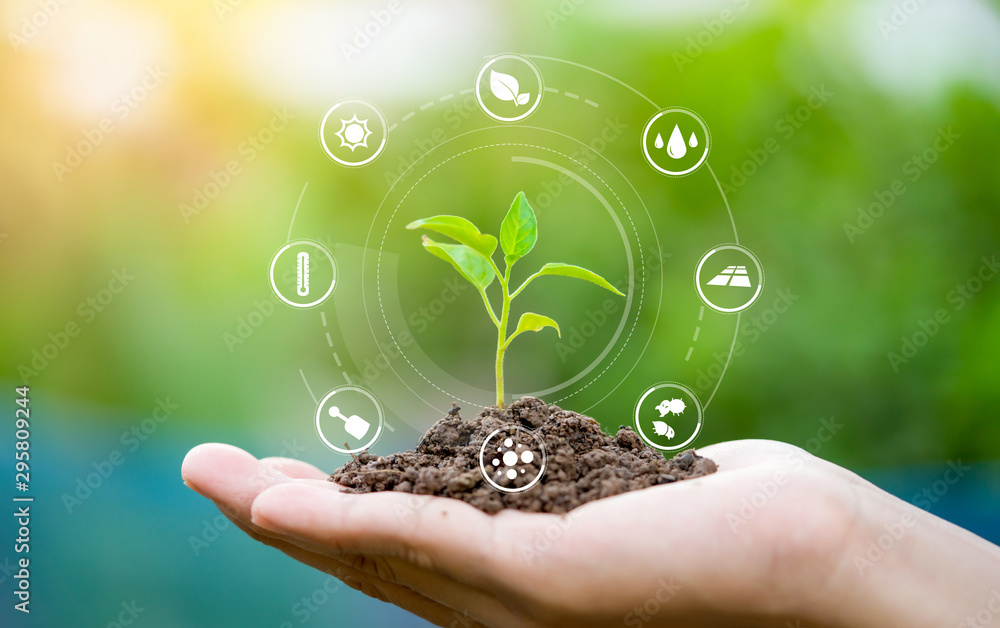 Fototapeta Hands holding seedlings, Modern agriculture with technology concept