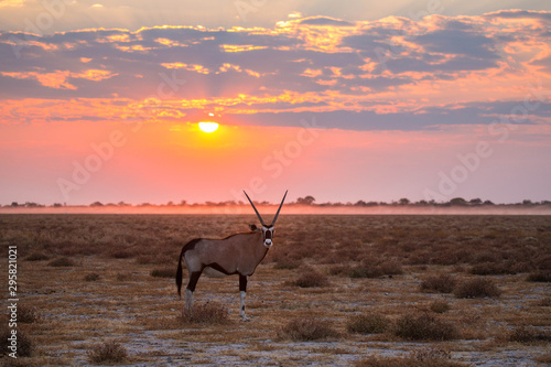Recess Fitting Antelope Oryx en Namibia