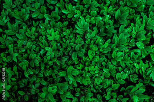 Fototapete - abstract green leaves pattern texture, nature background, tropical leaves