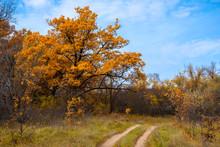 Autumn Forest Landscape - Dirt...