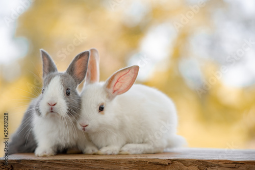 Photo The rabbit sit on the wood with light bokeh form nature background