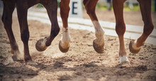 The Legs Of Two Horses Gallopi...