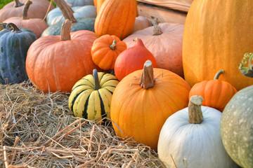 Autumn pumpkins harvest on straw