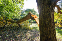 Large Tree Limb Broken Off Du...