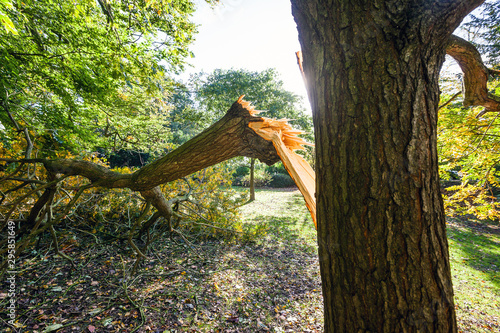 Large tree limb broken off during the St Jude storm that travelled across Europe in late October 2013 Canvas Print