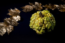 Green Decorative Warty Pumpkin With Golden Maple Leafs On Black Background