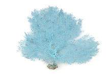 Blue Coral  Branch Isolated On...