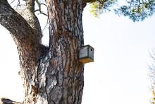 Wooden Bird House In Pine Tree
