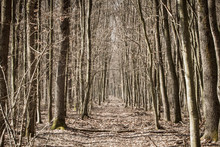 Narrow Path Through A Forest I...