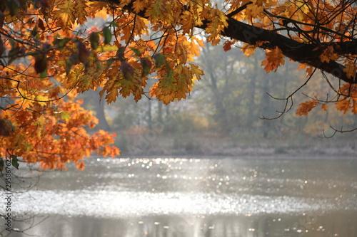buntes Herbstlaub mit glitzerndem Wasser im Hintergrund