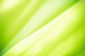 Green leaf on blurred green...