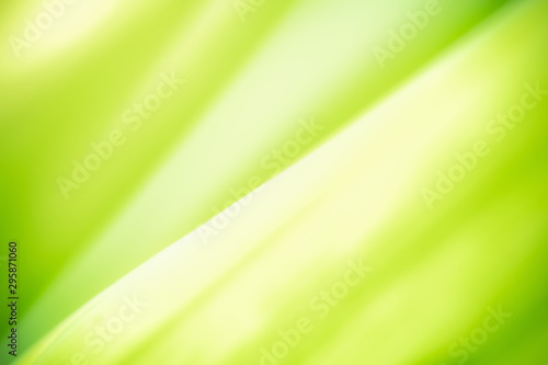 Autocollant pour porte Jaune de seuffre Green leaf on blurred greenery background. Beautiful leaf texture in nature. Abstract Natural background. close-up of macro with free space for text..