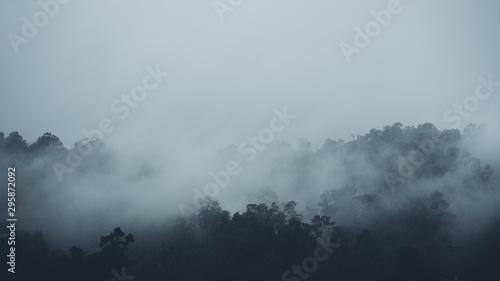 Foto auf AluDibond Rosa dunkel In the mist and rain forest, darkness