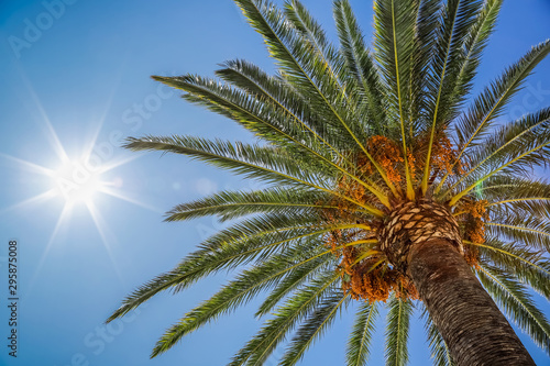 Date palm and sun in sky, view of the palm tree from the bottom up. Glare from the sun, real photo.
