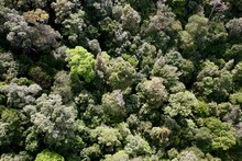 Overhead Shot Of A Tree Canopy With Different Green Trees In A Forest