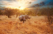 canvas print picture - Two Rhinos in late afternoon, Kruger National Park
