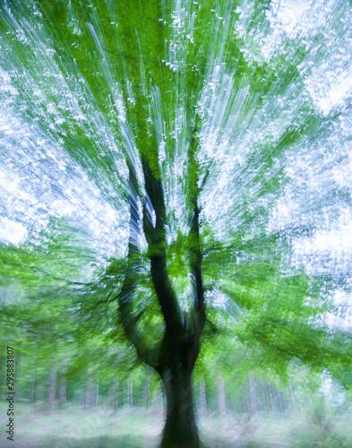 Aluminium Prints Green Beech forest (Bosque de Hayas), Gorbeia Natural Park, Alava-Bizkaia, Basque Country, Spain, Europe