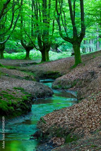 Foto auf Gartenposter Grun Beech forest (Bosque de Hayas), Gorbeia Natural Park, Alava-Bizkaia, Basque Country, Spain, Europe