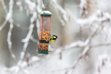 Great Tit At A Bird Feeder In The Garden In The Winter