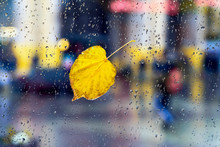One Yellow Fallen Leaf On Window Glass. View Through Glass Of Rain With City Lights Bokeh. Rainy Night In The Urban Street