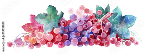 Stampa su Tela bunch of grapes in watercolor, element for design.