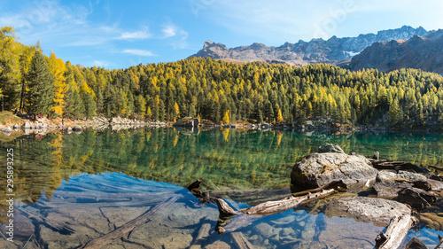 Montage in der Fensternische Honig Alpine lake and forest in autumn season, Swiss Alps. Saoseo Lake - Valposchiavo