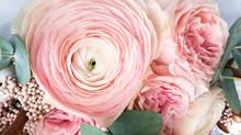 Buttercup Flower Close-up Gent...