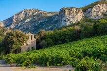 Vineyards In The Wine Region L...