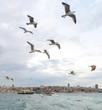 Leinwandbild Motiv Seagulls Bosphorus, Istanbul, Turkey seagulls are the ballerinas of the sky, for them to fly is not a meal but an aesthetic ritual