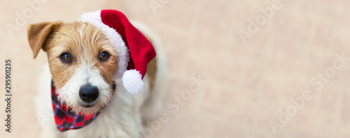 Photo Happy christmas pet dog puppy with santa hat, web banner with copy space