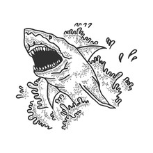 Shark Jumps Out Of Water And Opens Its Mouth Sketch Engraving Vector Illustration. T-shirt Apparel Print Design. Scratch Board Style Imitation. Black And White Hand Drawn Image.