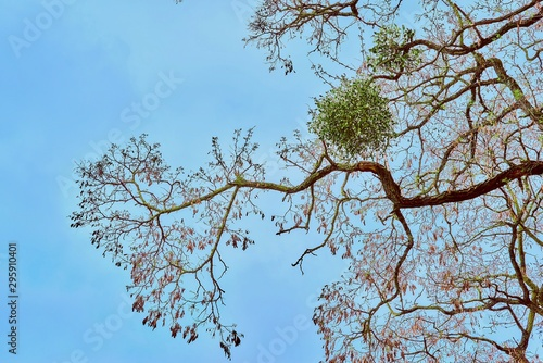 Fényképezés part of a branchy tree against the background of the sky