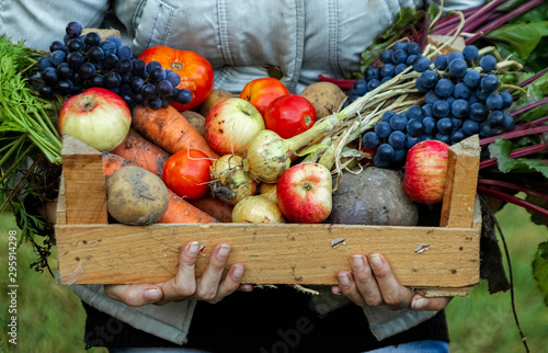 Pinturas sobre lienzo  Farmer girl holds in her hands a wooden box with a crop of vegetables and fruits, organic vegetables