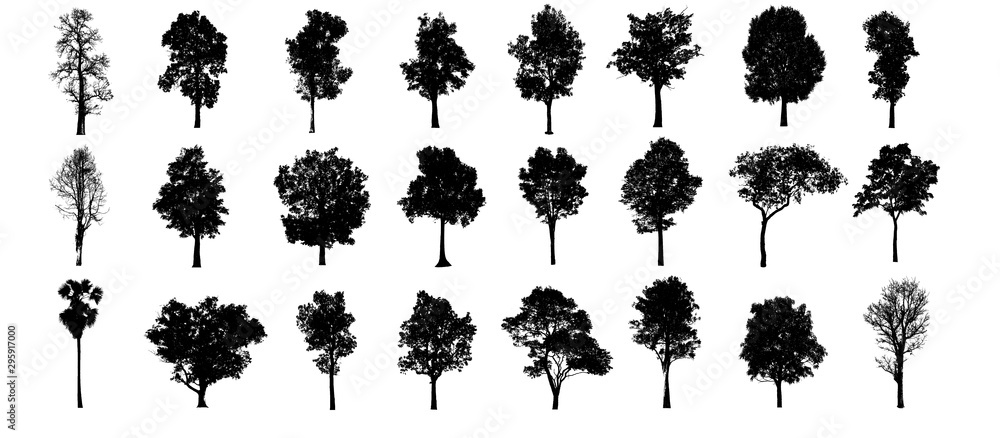 Fototapety, obrazy: collections black tree isolated. siluate tree isolated on white background.