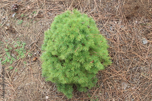 bright green tree and pine needles