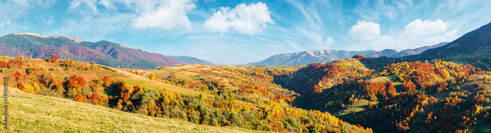 Fototapety, obrazy: mountain countryside on a sunny autumn evening. gorgeous afternoon weather with fluffy clouds on the sky. panorama with forested hills rolling in to the distant ridge. trees in fall foliage.