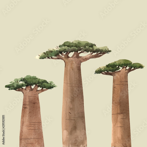 Carta da parati Watercolor vector baobab adansonia african tree illustrations