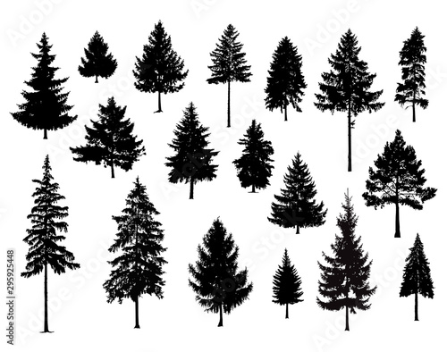 Photo  Set. Silhouettes of pine trees. Hand made.