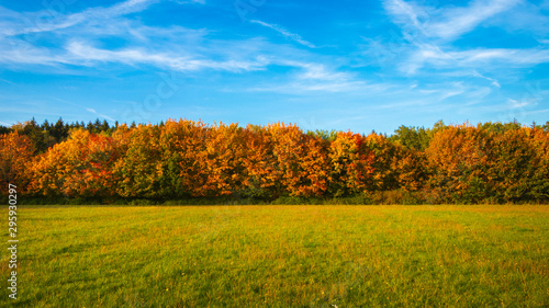 Obraz na plátně Herbstbäume mit Wiese und Himmel