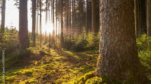 Foto Sonnenuntergang in einem Wald in Bayern