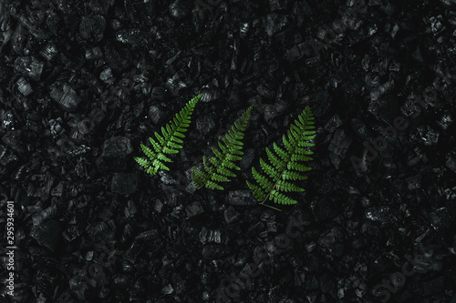 Fotografía Nature concept, Frame of green twigs and leaves on a dark coal background
