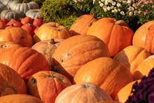 A Group Of Miniature Pumpkins ...