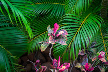 Green Palm Tree Leaves With Re...