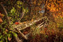 Old Cedar Rail Fence