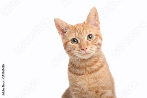 Tablou Canvas Beautiful cute orange cat