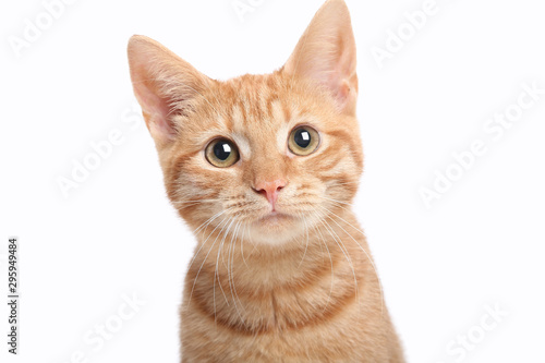 Beautiful cute orange cat Fototapeta