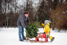 Little Boy With His Father Lay A Christmas Tree On A Sled To Take It Home From Winter Forest.