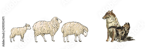 Two sheeps and lamb are walking towards the wolf.