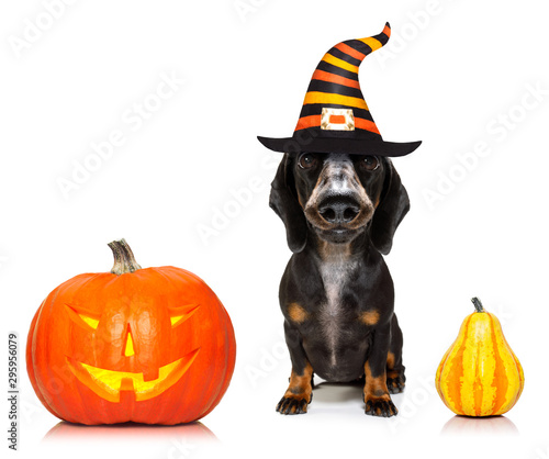 Foto op Aluminium Crazy dog halloween ghost dog trick or treat