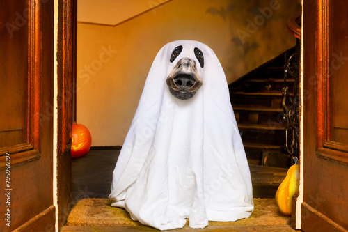 Tuinposter Crazy dog halloween ghost dog trick or treat